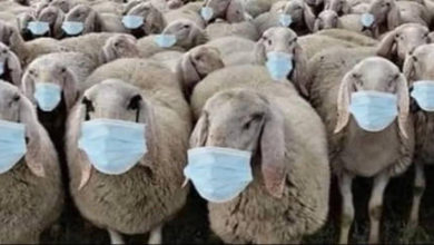 Photo de Propagande sanitaire